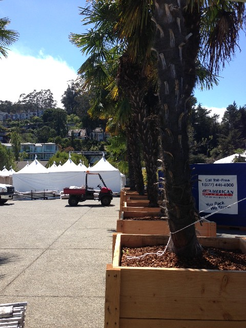 The palm trees are set up along either side of the entrance to the Sausalito Art Festival as workers complete the set-up for 2013.