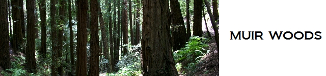 Many Sausalito visitors also visit Muir Woods, located on a nearby mountainside to the north.  We give you a complete guide to planning your visit to these majestic old-growth redwoods and the local trails.